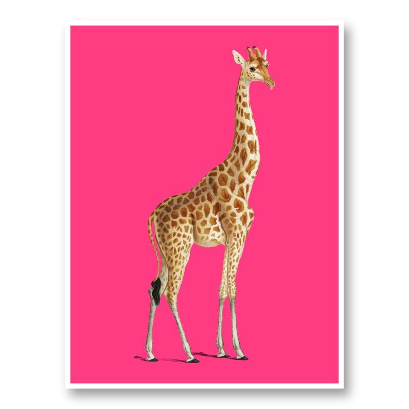 Vintage Giraffe Illustration Bright Pink Art Print