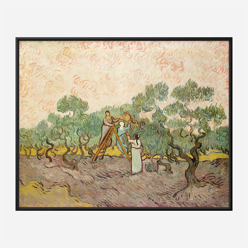 Women Picking Olives by Vincent Van Gogh Art Print
